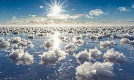"""海面盛开""""冰莲花"""",极寒天气的加拿大惊现绝世美景"""